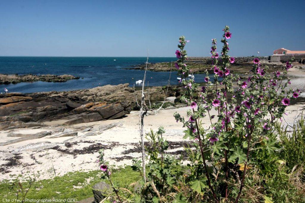Photo de l\'île d\'Yeu à visiter lors d\'un séjour au Côté Plage