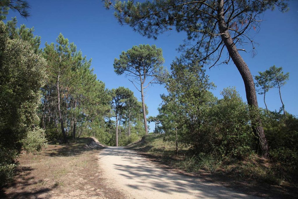 photo camping cote plage saint jean de monts vendee foret de pins